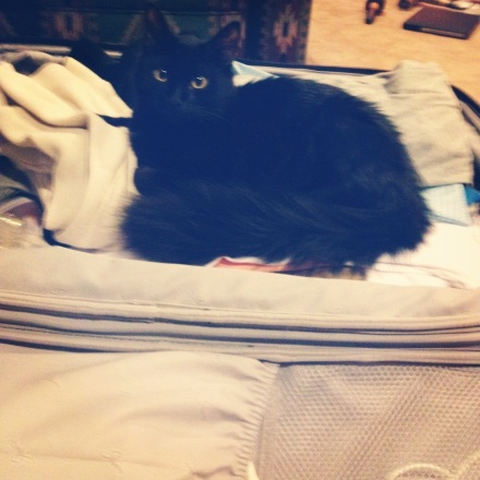 Cat in luggage 2